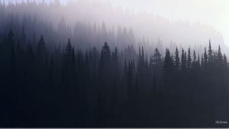 Shadow Forest Morning - Forests & Nature Background