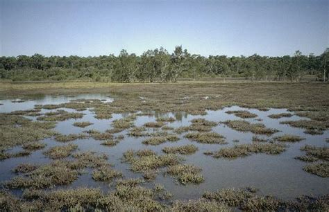 Mosquito management in saltwater wetlands
