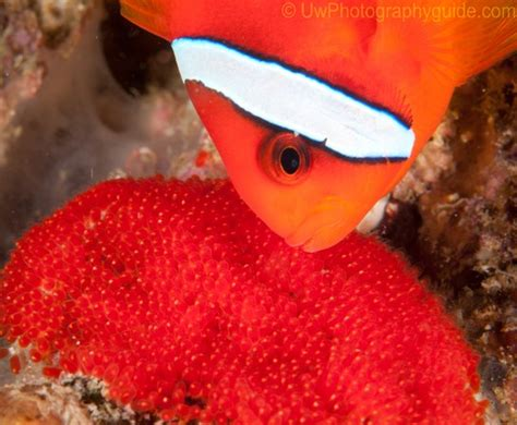 Anilao Shootout Winners 2011|Underwater Photography Guide