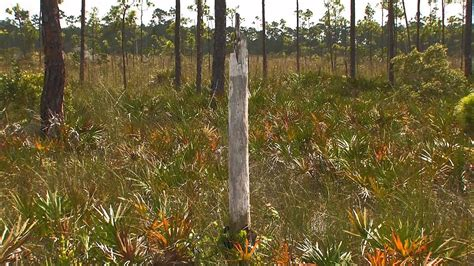 Everglades Mountains and Valleys: Pine Rockland - YouTube