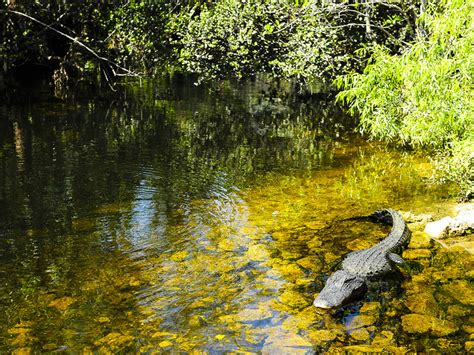 11 Best Places in Florida to Visit if you Love Animals